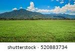 panorama of green rice field... | Shutterstock . vector #520883734