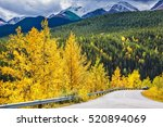 yellowed slender aspens near... | Shutterstock . vector #520894069