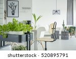 white home interior with herb... | Shutterstock . vector #520895791