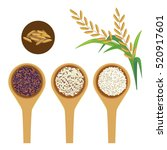 scoops of rice and paddy on... | Shutterstock .eps vector #520917601