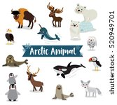 Arctic Animal Cartoon On White...