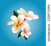 plumeria. vector flower | Shutterstock .eps vector #520971094