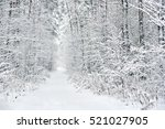 Snowy Forest. Latvia. Northern...