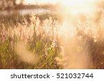 Lucid Fields. Beautiful...