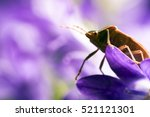 macro view of bedbug | Shutterstock . vector #521121301