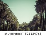 palm trees on the road on sunny ... | Shutterstock . vector #521134765