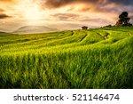 beautiful sunset at rice field...   Shutterstock . vector #521146474