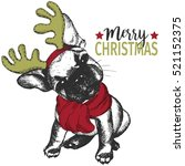 Portrait Of Christmas Dog....