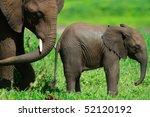 Elephants In Tarangire Nationa...