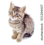 Stock photo striped grey kitten isolated on white background striped not purebred kitten 521204437