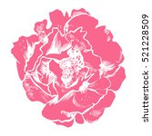 hand drawing peonies. vector... | Shutterstock .eps vector #521228509