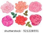 hand drawing peonies. vector...   Shutterstock .eps vector #521228551
