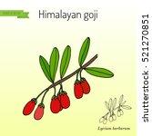 goji berry  lycium barbarum  or ... | Shutterstock .eps vector #521270851