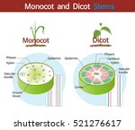 a picture comparing monocot and ... | Shutterstock .eps vector #521276617