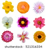 Assorted Colorful Flowers Head...