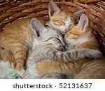 Stock photo kitten in basket 52131637