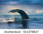 huge hump backed whale ... | Shutterstock . vector #521378827