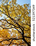autumn background. tree with...   Shutterstock . vector #521397349
