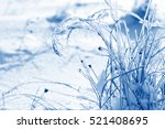 Grass Branches Frozen In The...