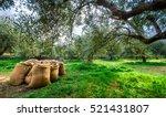 harvested. | Shutterstock . vector #521431807
