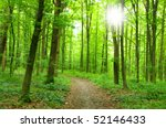 forest and sun | Shutterstock . vector #52146433