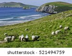 View Of Sheep Grazing Along Th...