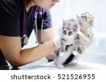 Stock photo young female veterinary doctor looking on cute kitten 521526955