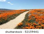 A Peaceful Path Through A Field ...