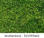 Ornamental Shrubs  Wall Shrubs