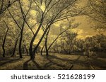 old alley in the park... | Shutterstock . vector #521628199