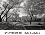 old alley in the park... | Shutterstock . vector #521628211