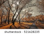 old alley in the park... | Shutterstock . vector #521628235