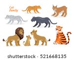 cat family. felidae family of... | Shutterstock .eps vector #521668135