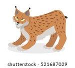 lynx  bobcat  wildcat isolated...