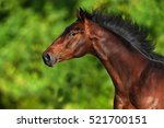 Beautiful Horse Portrait Run O...