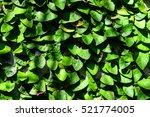 Green Climber Tree On The Wall