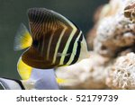life in aquarium | Shutterstock . vector #52179739