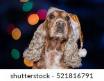 Santa Dressed Dog Cocker...