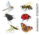 insect set | Shutterstock .eps vector #521833675