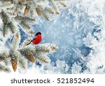 Pine Branches With Bird On A...