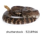 Southern Pacific Rattlesnake ...