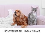 Cute Dog And Cat Together On...