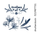 vector pinecone set  hand... | Shutterstock .eps vector #521987731
