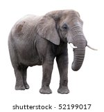 african elephant | Shutterstock . vector #52199017