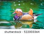 Mandarin Duck Swimming In A Pond