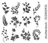 Curly Branches Silhouettes Wit...