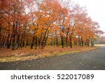 Beautiful Colorful Trees In A...