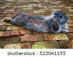 The Rabbit Gray Tone Skin Slee...