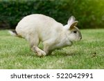 Stock photo little rabbit running on the grass 522042991