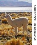 bolivia  potosi departmant  sur ... | Shutterstock . vector #522085891